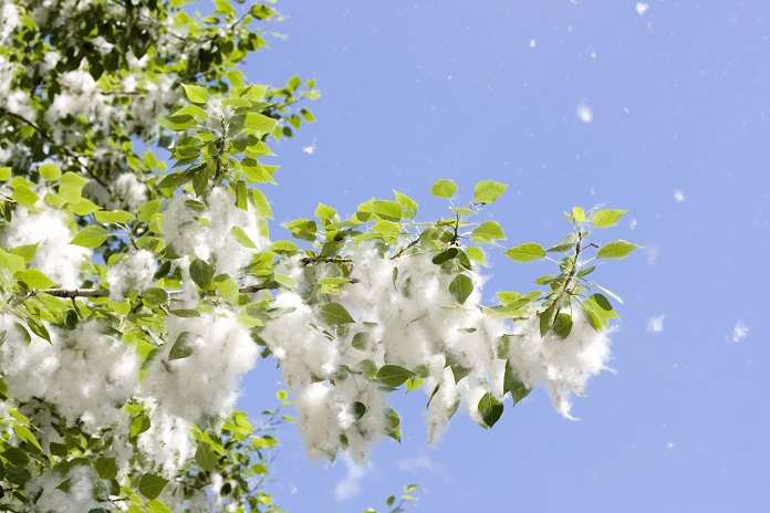 Как избавиться от аллергии