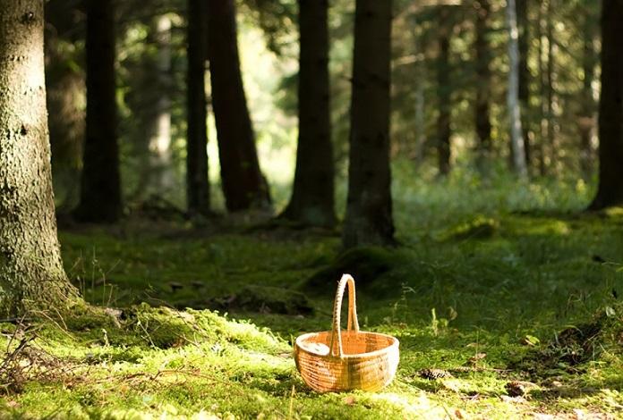 в лес за грибами