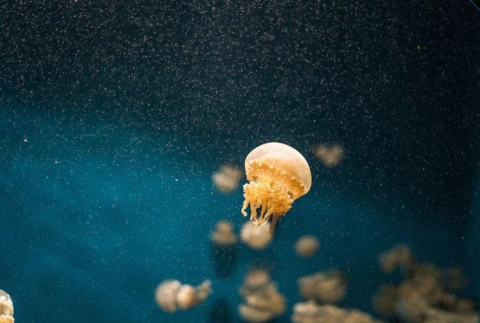 ужалила медуза