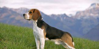 тест на знание пород собак
