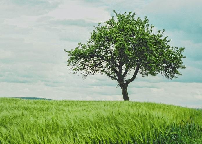 какое вы дерево