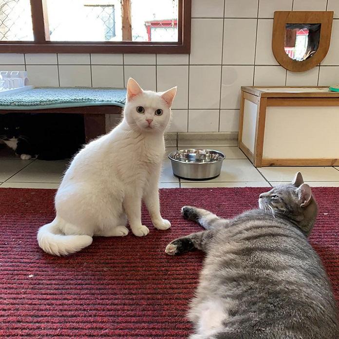плавучий приют для кошек