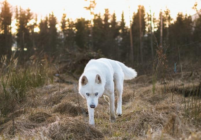 Тест: Какое животное является отражением ваших инстинктов?