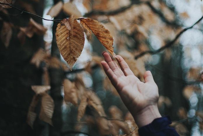 Какое дерево совпадает с вашим характером?